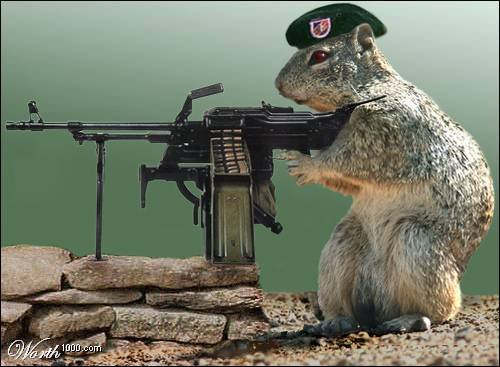 airsoft sniper rifle squirrels